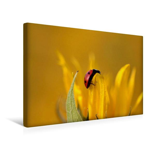 Premium Textil-Leinwand 45 cm x 30 cm quer, Kletternder Marienkäfer | Wandbild, Bild auf Keilrahmen, Fertigbild auf echter Leinwand, Leinwanddruck - Coverbild