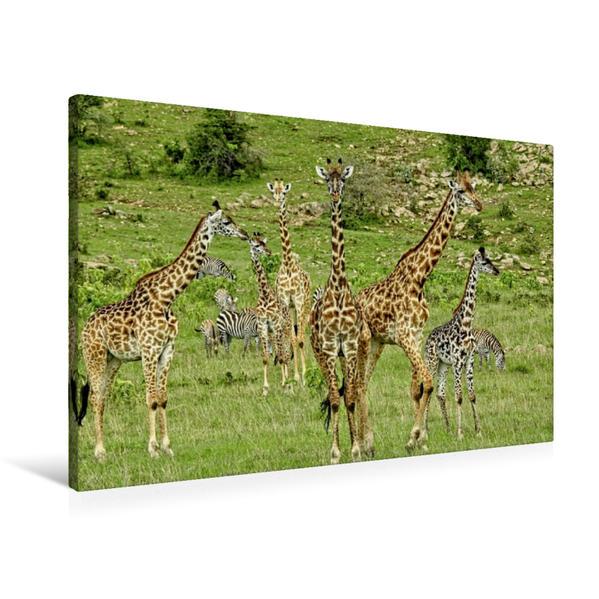 Premium Textil-Leinwand 90 cm x 60 cm quer, Giraffen | Wandbild, Bild auf Keilrahmen, Fertigbild auf echter Leinwand, Leinwanddruck - Coverbild