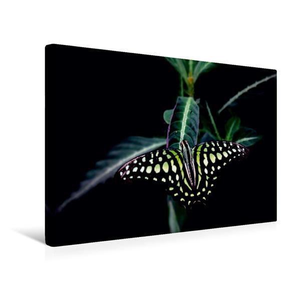 Premium Textil-Leinwand 45 cm x 30 cm quer, Farbenprächtiger Schmetterling   Wandbild, Bild auf Keilrahmen, Fertigbild auf echter Leinwand, Leinwanddruck - Coverbild