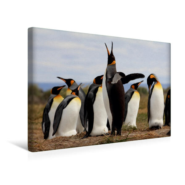 Premium Textil-Leinwand 45 cm x 30 cm quer, Magellan-Pinguin, Argentinien | Wandbild, Bild auf Keilrahmen, Fertigbild auf echter Leinwand, Leinwanddruck - Coverbild