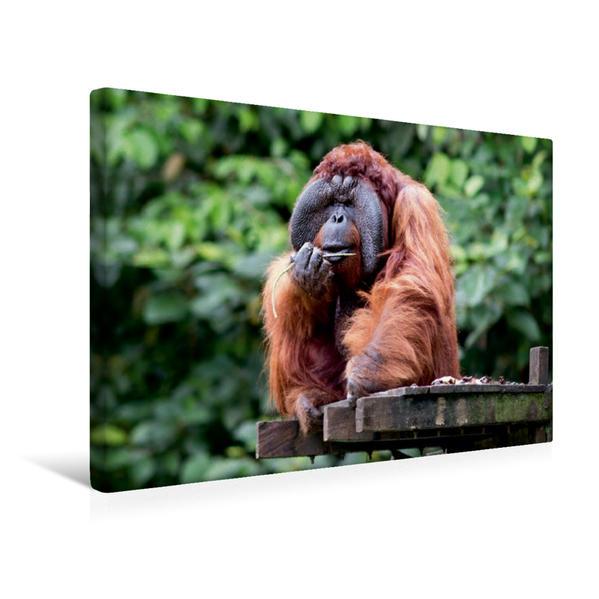 Premium Textil-Leinwand 45 cm x 30 cm quer, Männlicher Orang-Utan | Wandbild, Bild auf Keilrahmen, Fertigbild auf echter Leinwand, Leinwanddruck - Coverbild