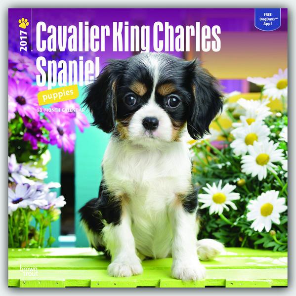 Cavalier King Charles Spaniel Puppies - Cavalier King Charles Spaniel Welpen 2017 - 18-Monatskalender mit freier DogDays-App - Coverbild