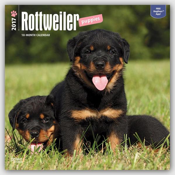Rottweiler Puppies - Rottweiler-Welpen 2017 - 18-Monatskalender mit freier DogDays-App - Coverbild