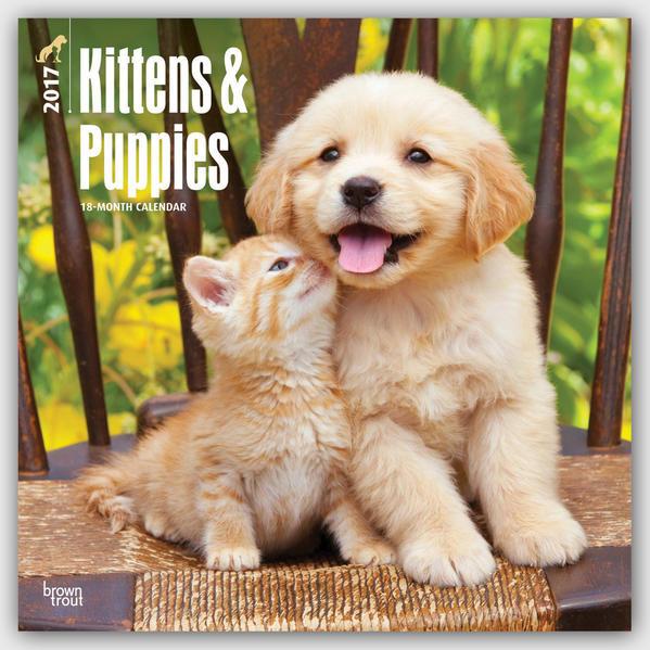 Kittens & Puppies - Kätzchen & Hundewelpen 2016 - 18-Monatskalender - Coverbild