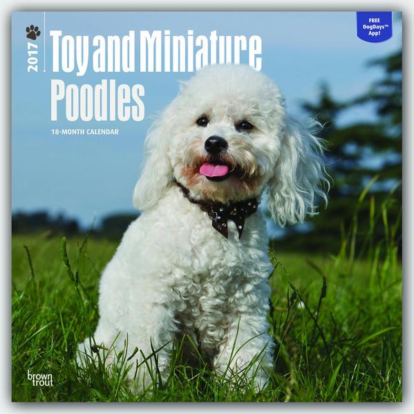 Toy and Miniature Poodles - Toypudel und Zwergpudel 2017 - 18-Monatskalender mit freier DogDays-App - Coverbild