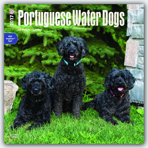 Portuguese Water Dogs - Portugisischer Wasserhund 2017 - 18-Monatskalender mit freier DogDays-App - Coverbild