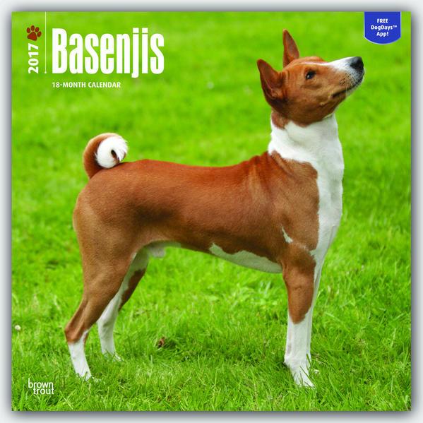 Basenjis - Kongo-Terrier 2017 - 18-Monatskalender mit freier DogDays-App - Coverbild