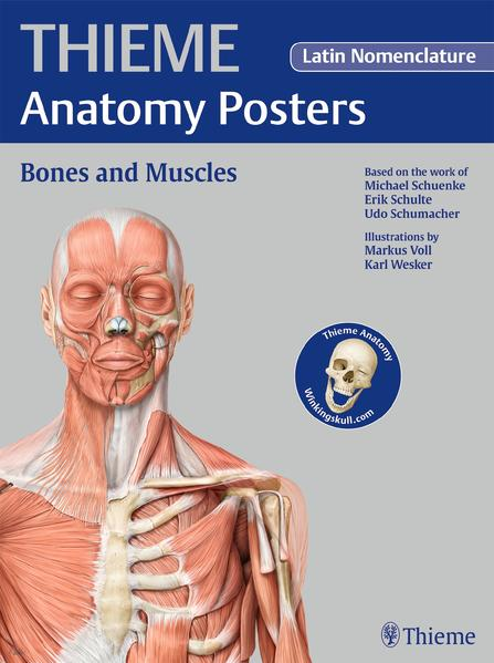 THIEME Anatomy Posters Bones and Muscles, Latin Nomeclature - Coverbild
