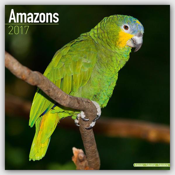 Amazons - Amazonenpapageien 2017 - Coverbild