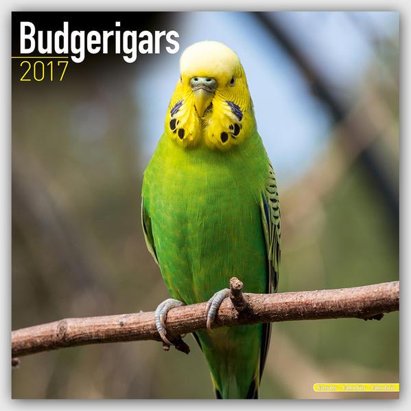 Budgerigars - Wellensittiche 2017 - Coverbild