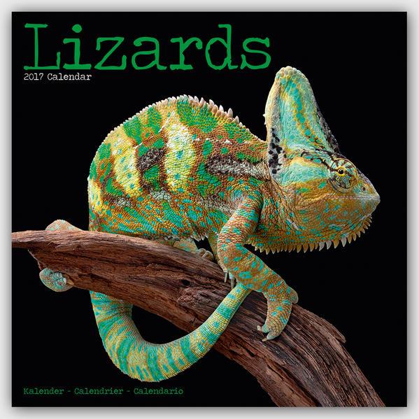 Lizards - Eidechsen 2017 - Coverbild