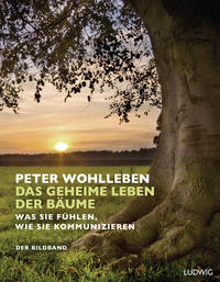 Das geheime Leben der Bäume Cover