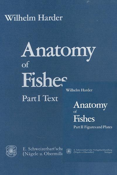Anatomy of Fishes TORRENT Herunterladen