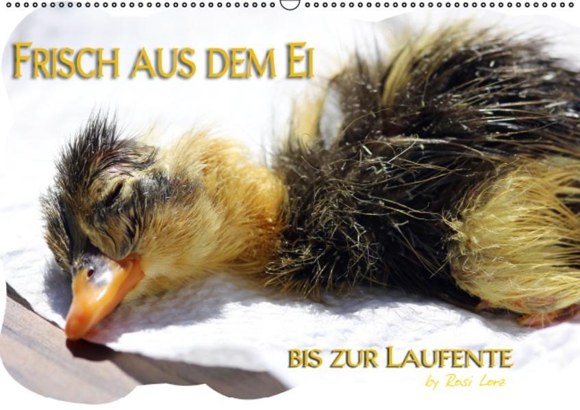 Frisch aus dem Ei bis zur Laufente (PosterbuchDIN A2 quer) - Coverbild