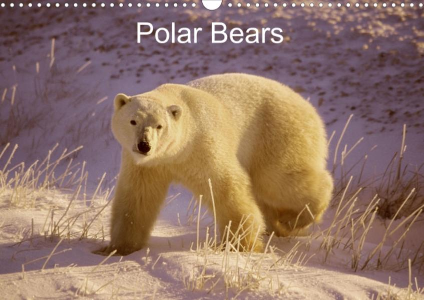 Polar Bears (Poster Book DIN A4 Landscape) - Coverbild