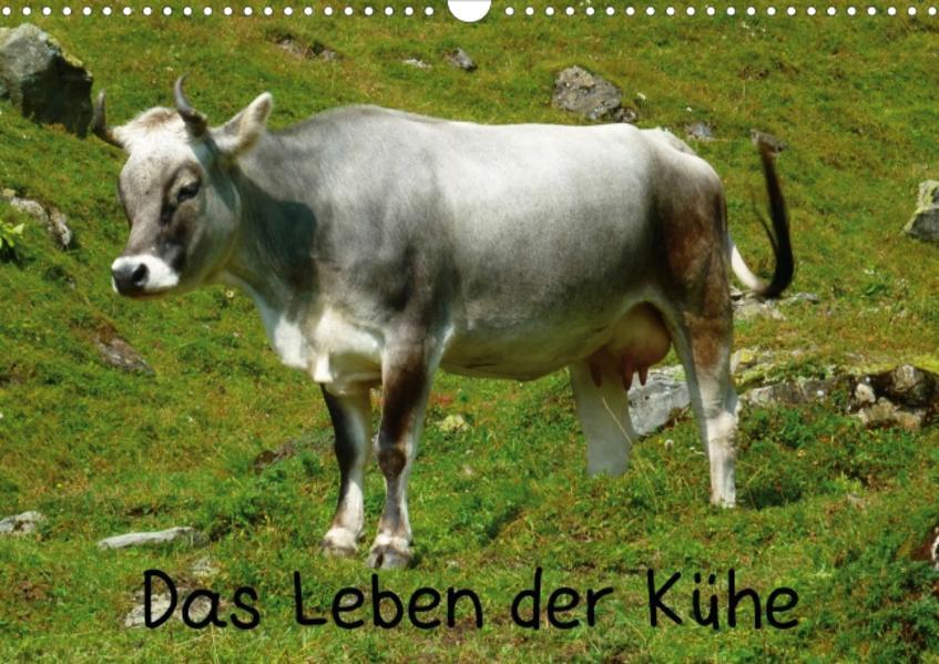 Das Leben der Kühe (Posterbuch DIN A4 quer) - Coverbild