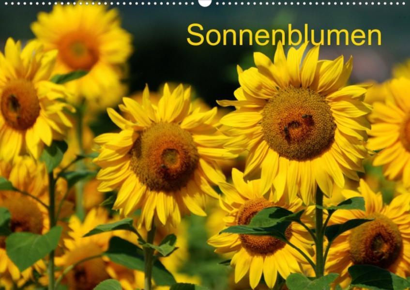 Sonnenblumen  (Posterbuch DIN A4 quer) - Coverbild