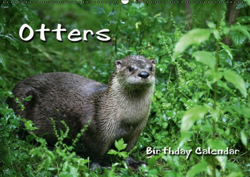 Otters / UK-Version / Birthday Calendar (Wall Calendar perpetual DIN A2 Landscape) - Coverbild