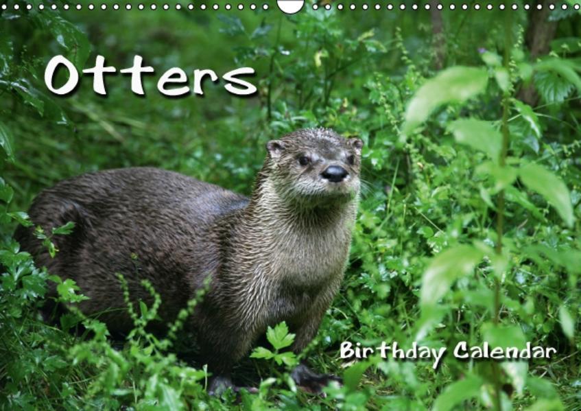 Otters / UK-Version / Birthday Calendar (Wall Calendar perpetual DIN A3 Landscape) - Coverbild