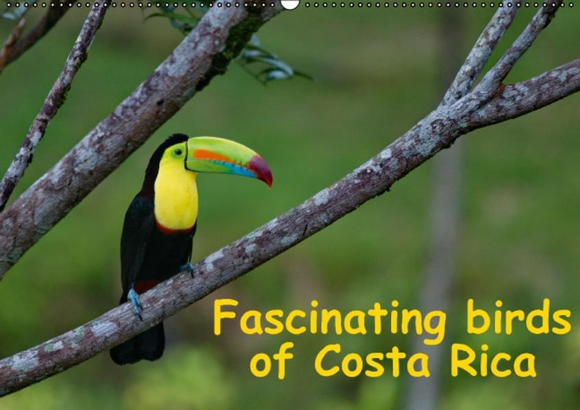 Fascinating birds of Costa Rica / UK-Version (Wall Calendar perpetual DIN A2 Landscape) - Coverbild