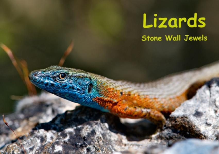 Lizards - Stone Wall Jewels (Stand-Up Mini Poster  DIN A5 Landscape) - Coverbild