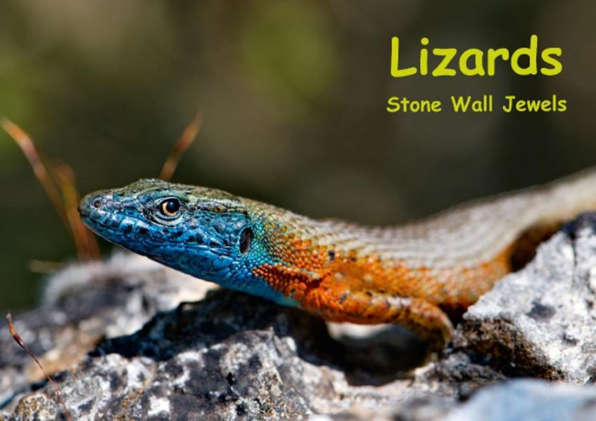 Lizards - Stone Wall Jewels (Poster Book DIN A3 Landscape) - Coverbild