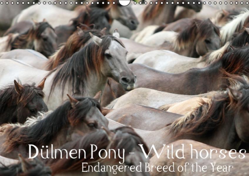 Dülmen Pony - Wild horses / UK-Version (Wall Calendar perpetual DIN A3 Landscape) - Coverbild