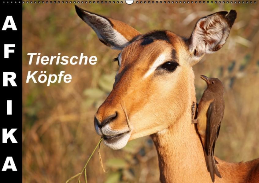 AFRIKA - Tierische Köpfe (Wandkalender immerwährend DIN A2 quer) - Coverbild