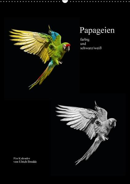 Papageien - farbig und schwarz/weiß (Wandkalender 2016 DIN A2 hoch) - Coverbild