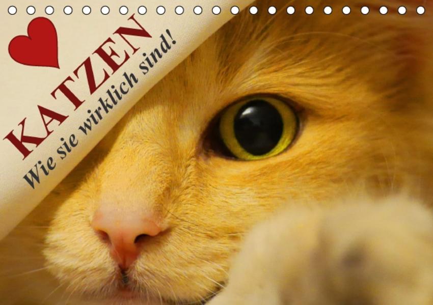 Download Katzen • Wie sie wirklich sind! PDF Kostenlos