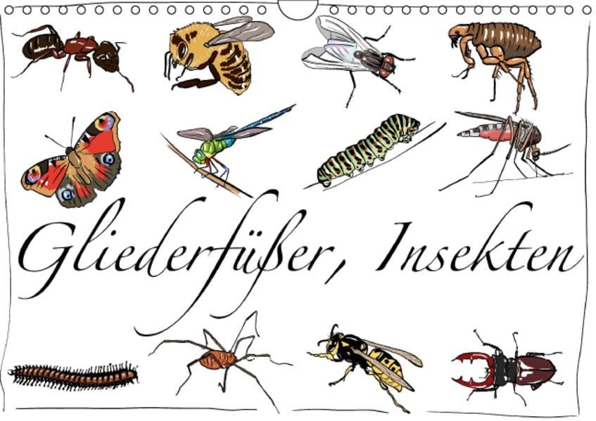 Gliederfüßer und Insekten