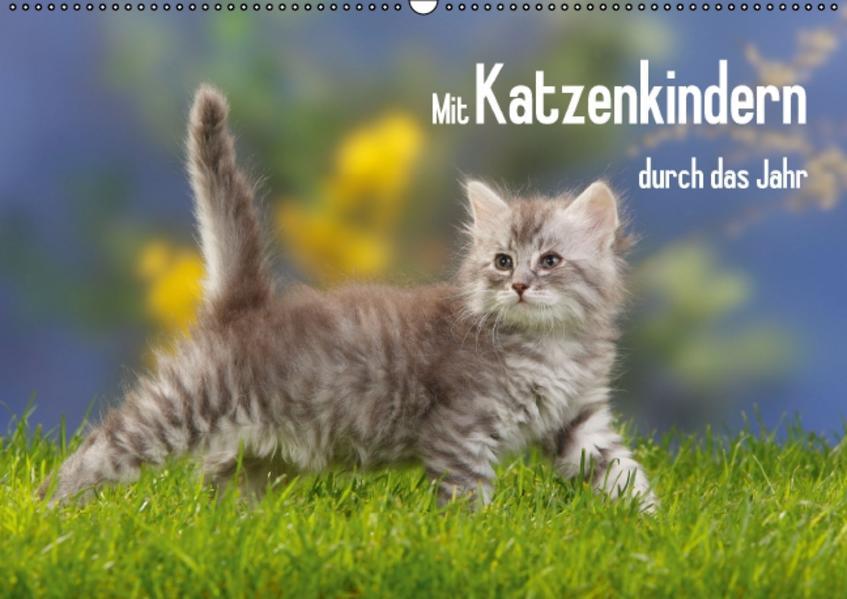 Download Mit Katzenkindern durch das Jahr Epub Kostenlos
