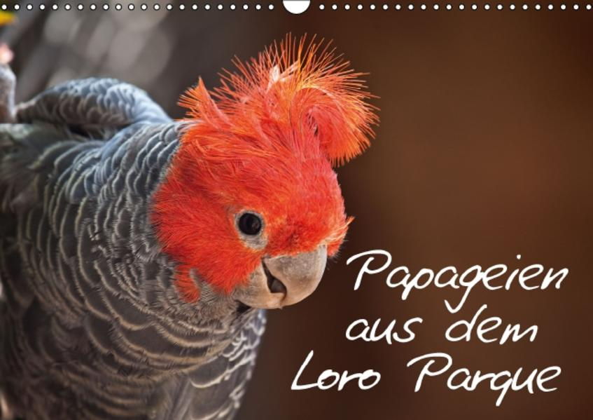 Papageien im Loro Parque (Wandkalender 2016 DIN A3 quer) - Coverbild