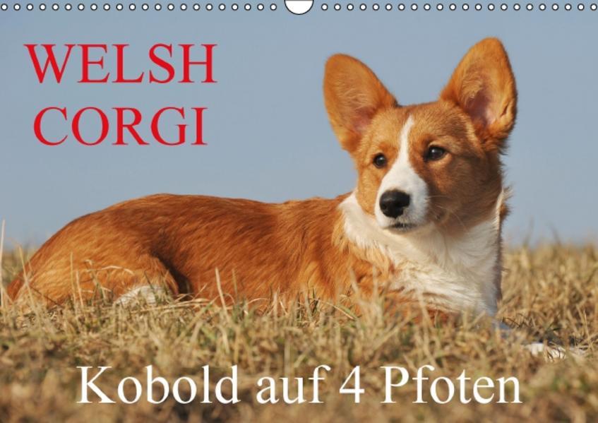 Welsh Corgi - Kobold auf 4 Pfoten Laden Sie Das Kostenlose PDF Herunter