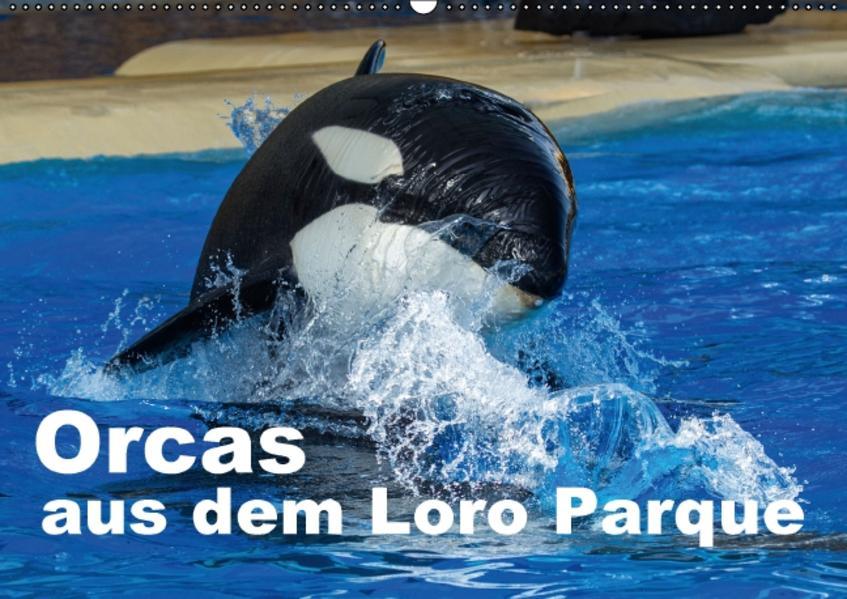 Orcas aus dem Loro Parque (Wandkalender 2016 DIN A2 quer) - Coverbild