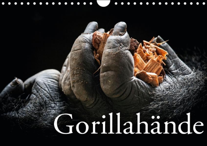 Gorillahände (Wandkalender 2016 DIN A4 quer) - Coverbild