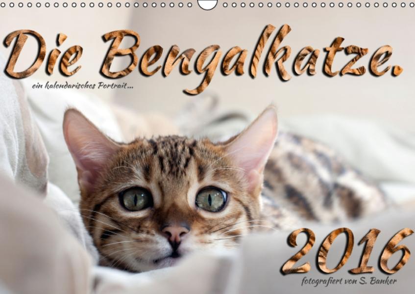 Die Bengalkatze. Ein fotografisches Portrait (Wandkalender 2016 DIN A3 quer) - Coverbild