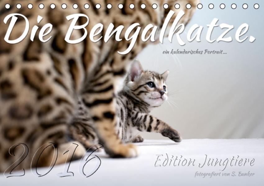 Die Bengalkatze. Edition Jungtiere (Tischkalender 2016 DIN A5 quer) - Coverbild