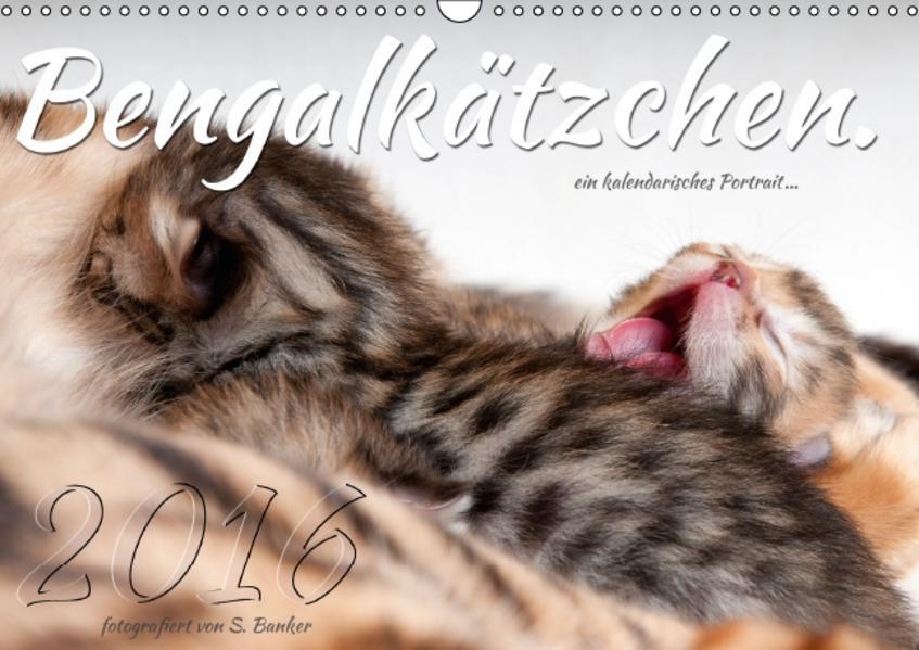 Bengalkätzchen (Wandkalender 2016 DIN A3 quer) - Coverbild