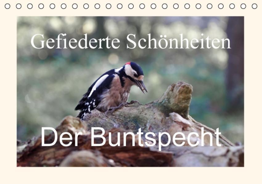 Gefiederte Schönheiten - Der Buntspecht (Tischkalender 2016 DIN A5 quer) - Coverbild