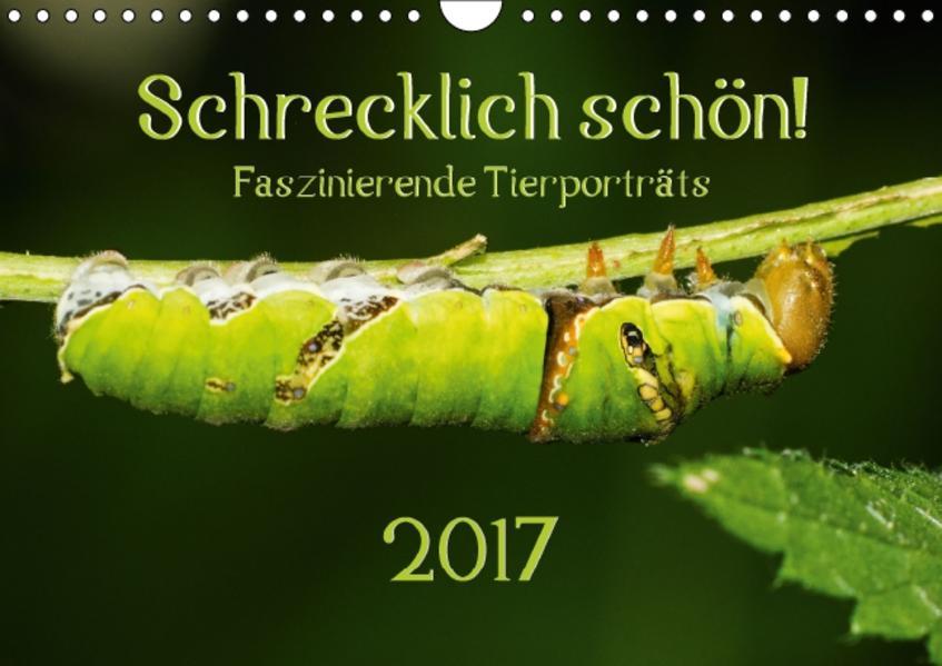 Schrecklich schön! Faszinierende Tierporträts (Wandkalender 2017 DIN A4 quer) - Coverbild