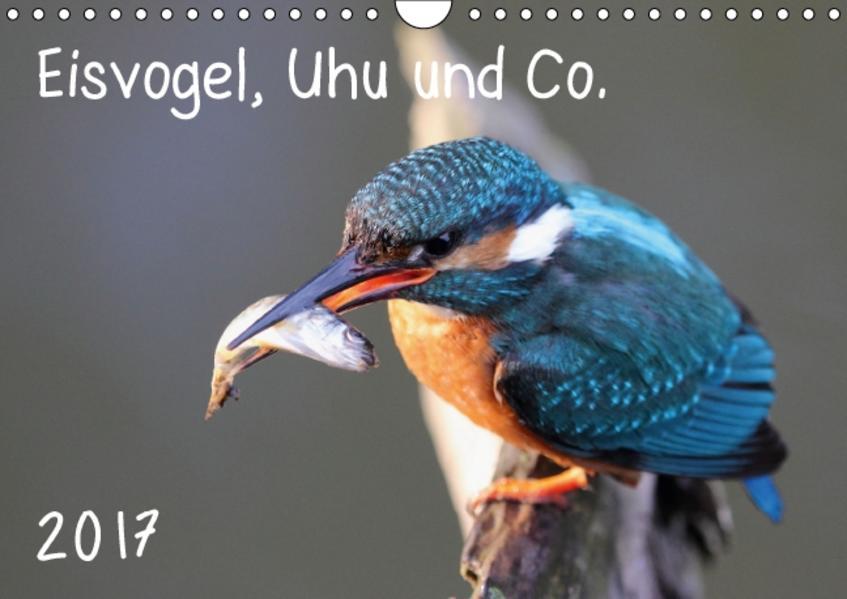 Eisvogel, Uhu und Co. (Wandkalender 2017 DIN A4 quer) - Coverbild