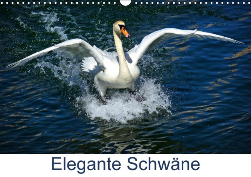 Elegante Schwäne (Wandkalender 2017 DIN A3 quer) - Coverbild