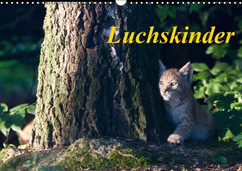 Luchskinder (Wandkalender 2017 DIN A3 quer) - Coverbild