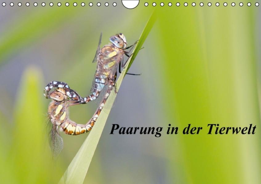 Paarung in der Tierwelt (Wandkalender 2017 DIN A4 quer) - Coverbild