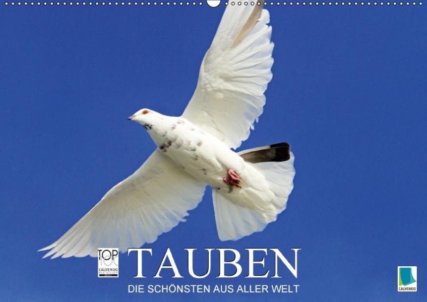 Tauben: die Schönsten aus aller Welt (Wandkalender 2017 DIN A2 quer) - Coverbild