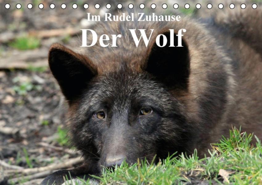 Im Rudel Zuhause - Der Wolf (Tischkalender 2017 DIN A5 quer) - Coverbild