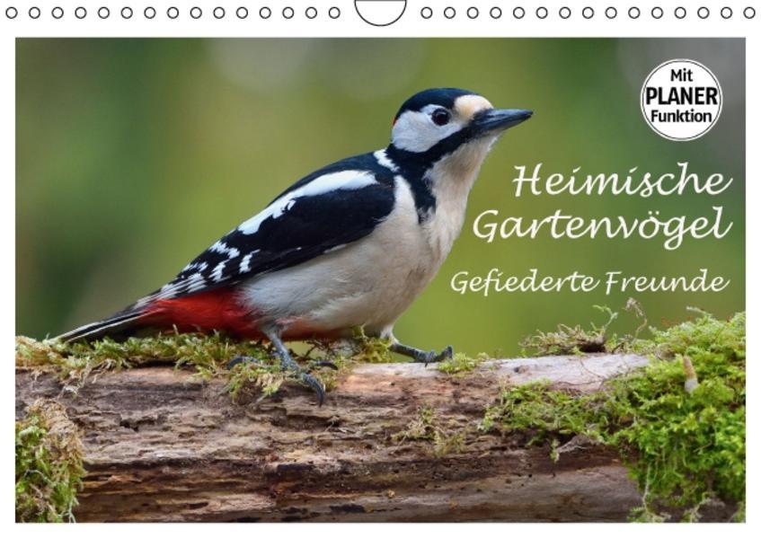 Heimische Gartenvögel Gefiederte Freunde (Wandkalender 2017 DIN A4 quer) - Coverbild