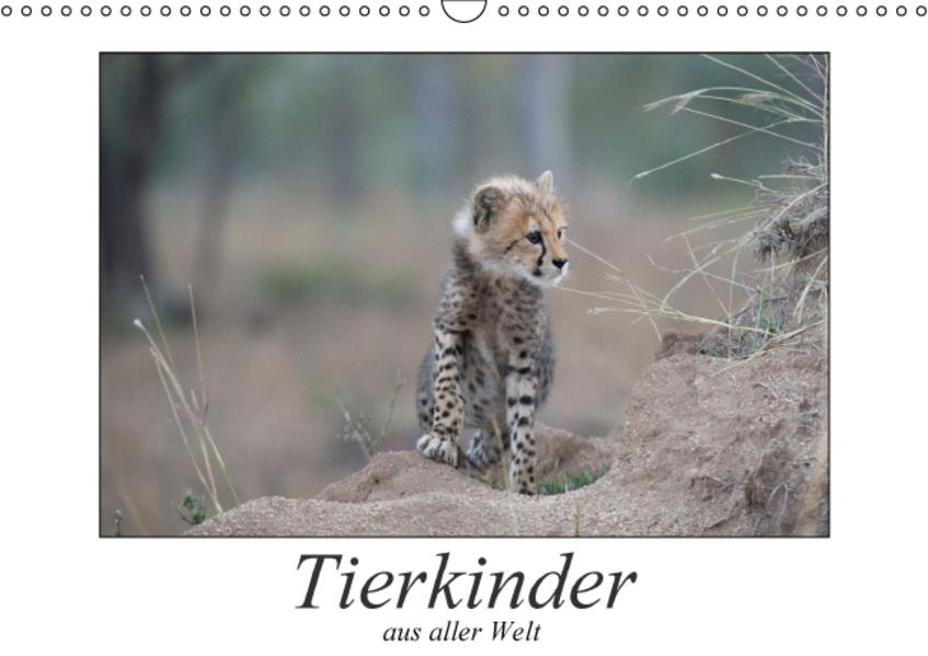 Tierkinder aus aller Welt (Wandkalender 2017 DIN A3 quer) - Coverbild