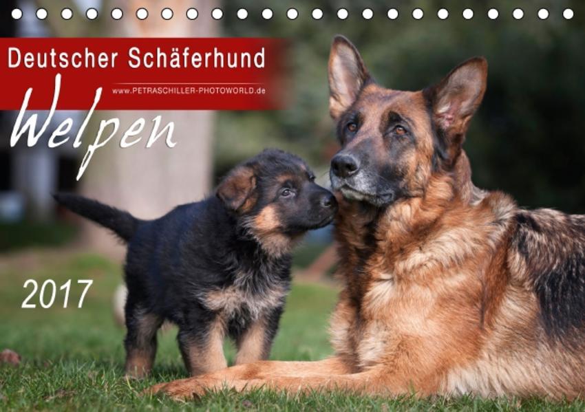 Deutscher Schäferhund - Welpen / CH-Version (Tischkalender 2017 DIN A5 quer) - Coverbild